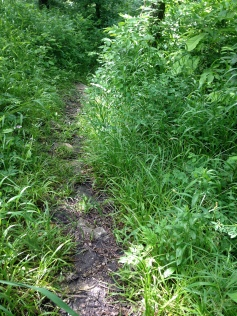 Teter Nature Trail - narrowing and overgrown.