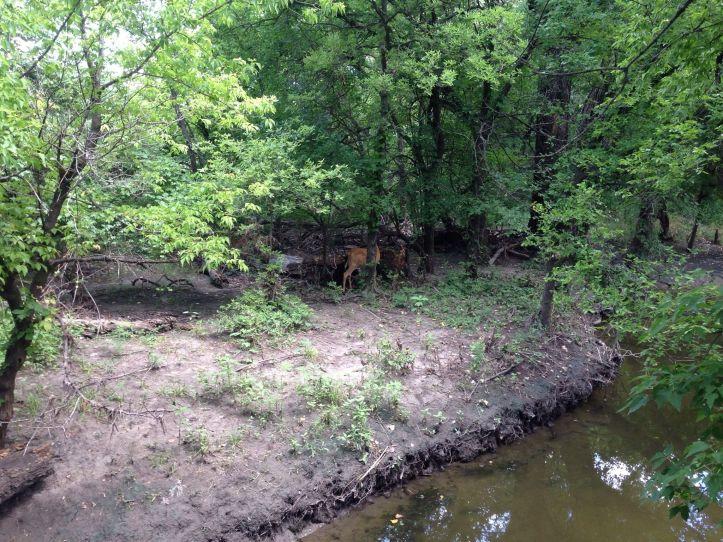 Deer near the water.